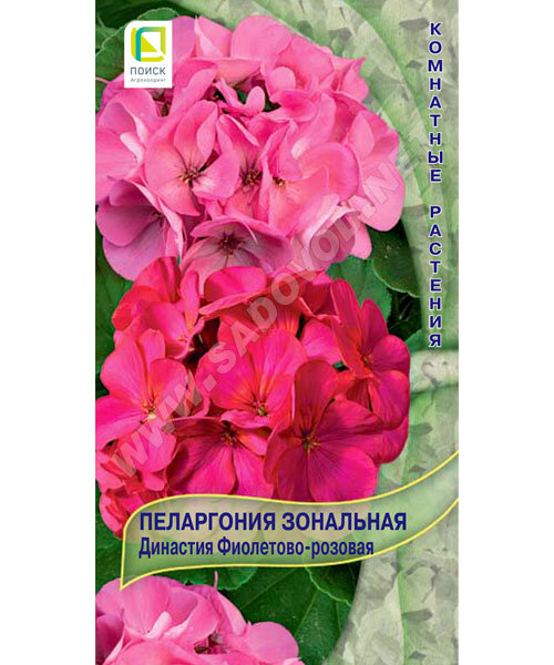 Зональная пеларгония сиренево-розовая