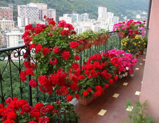 И герани на балконе...