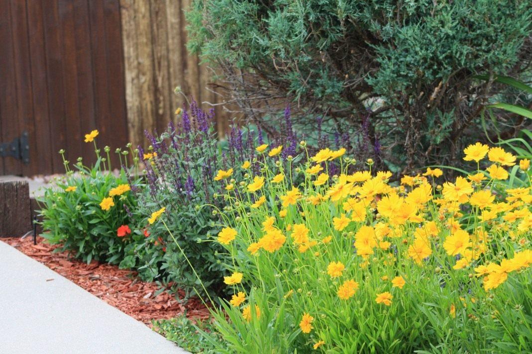 Цветы, радующие нас не только летом...