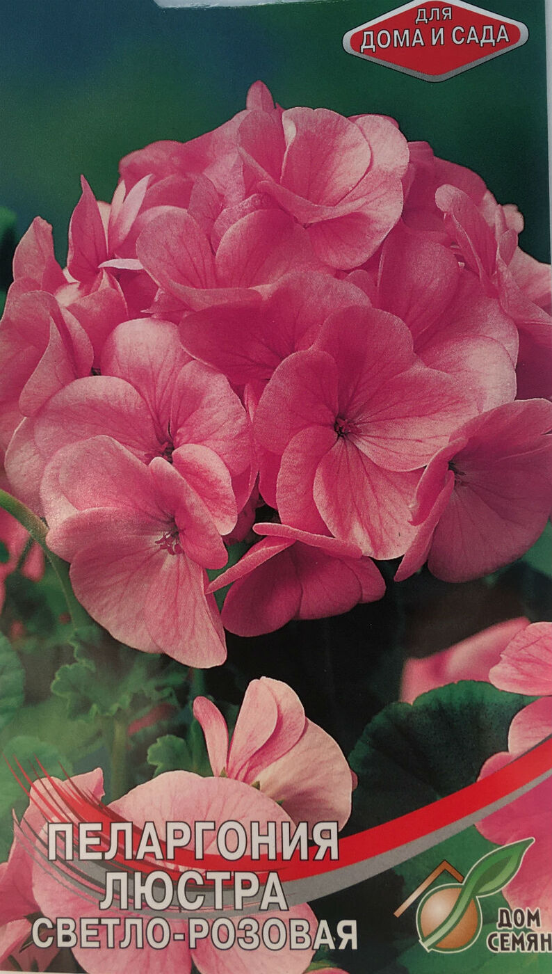 Герань (пеларгония), серия Люстра F1, розовая
