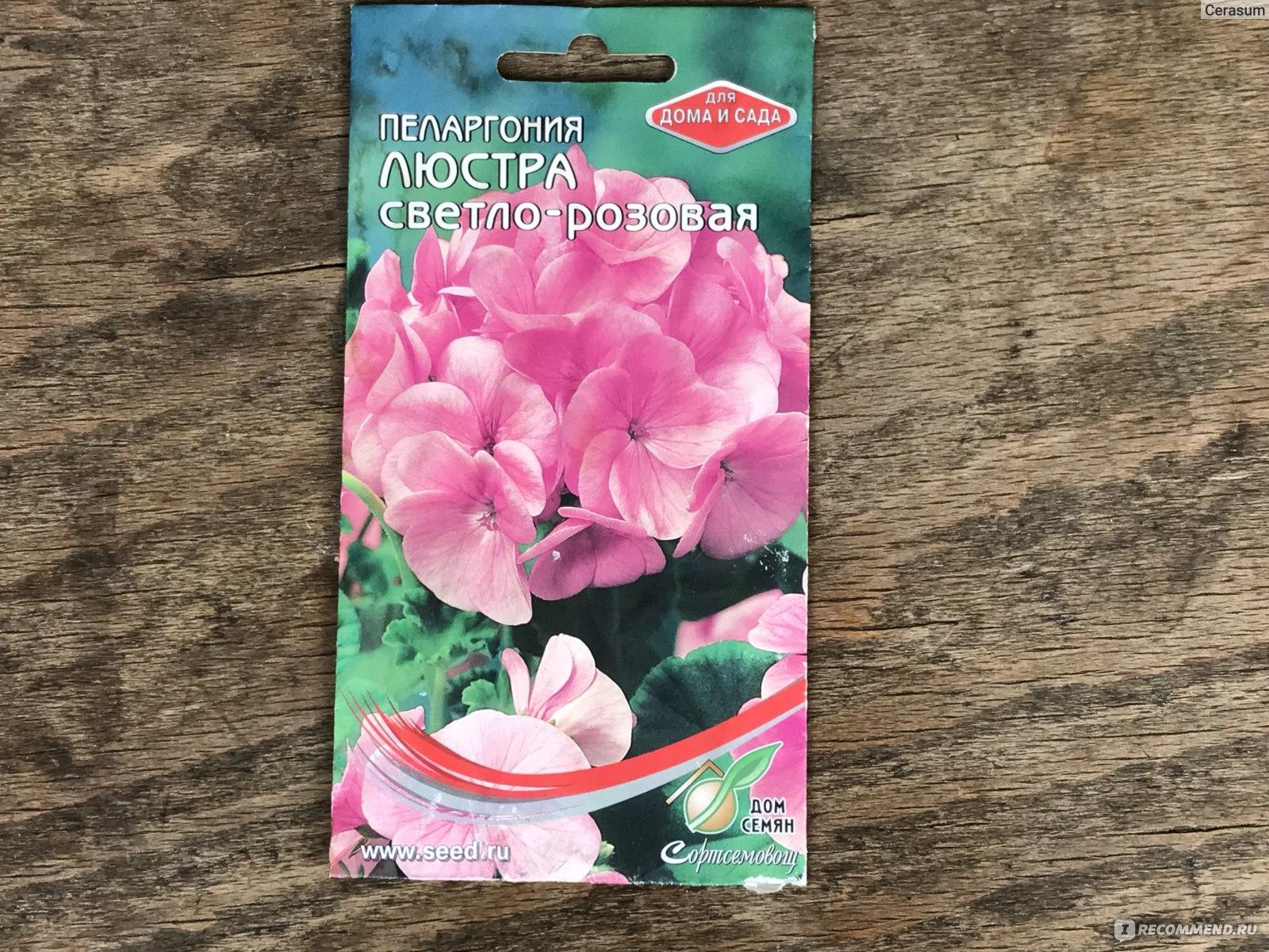 Пеларгония Люстра розовая, гибрид F1
